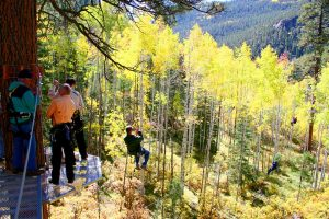 Two of 27 zip lines at Soaring Treetop Adventures near Durango. Photo courtesy Soaring Treetop Adventures.