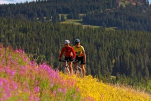Wildflowers have graced Steamboat's trails and hillsides for decades.